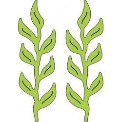 B179 / Iris leaves